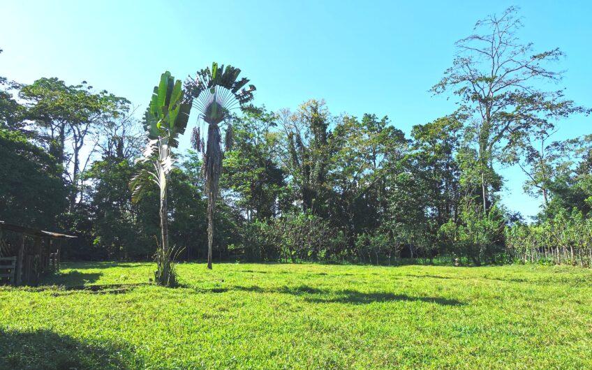 Finca en Venta, Guápiles, Limón. Cod.FV5154