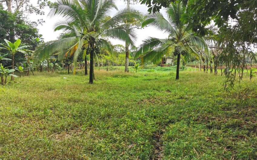 Lote en Vende, Guápiles, Limón. Cod. LV5151
